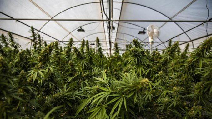 Virginia Becomes The First Southern State To Legalize Weed